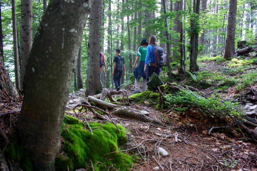 Waldwanderweg auf dem Abstieg vom Jochberg zum Walchensee.