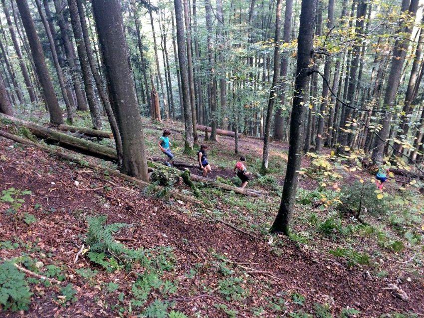 Der Downhill im Wald hinunter zum Sagfleckl / Sagkogel macht richtig Spaß!