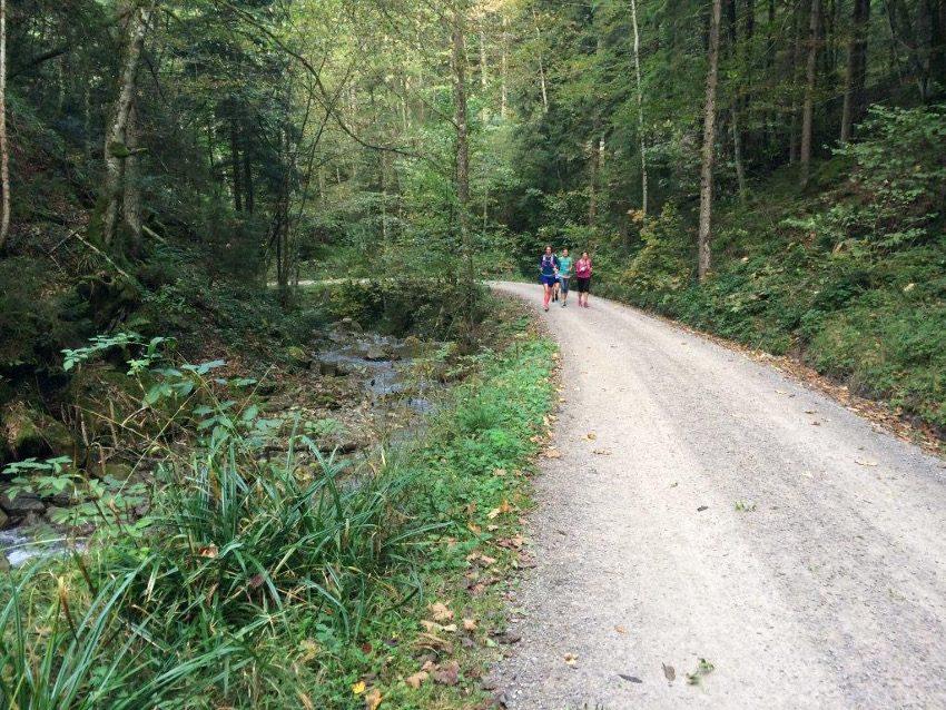 Eine Forststraße führte uns raus aus Tegernsee und in die Natur.